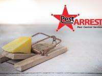 Pest Control Company Digital Marketing and web design